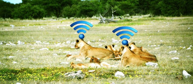 MobileWiFi for Tourists and Travelers